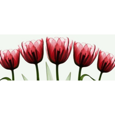Red X Ray Tulips Printed Canvas, Red, White
