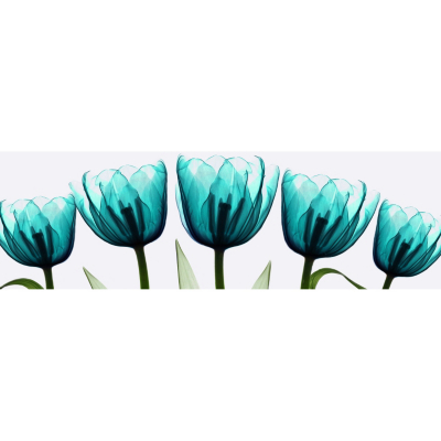 Teal X Ray Tulips Printed Canvas, Green 002017