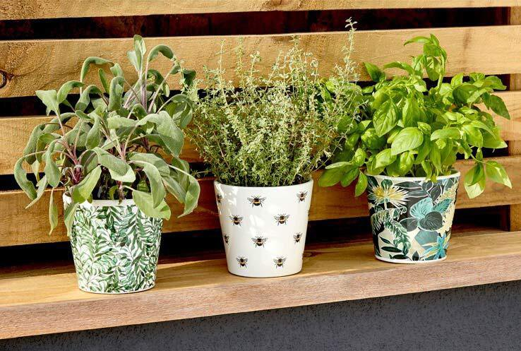 Three plant pots on a wooden bench