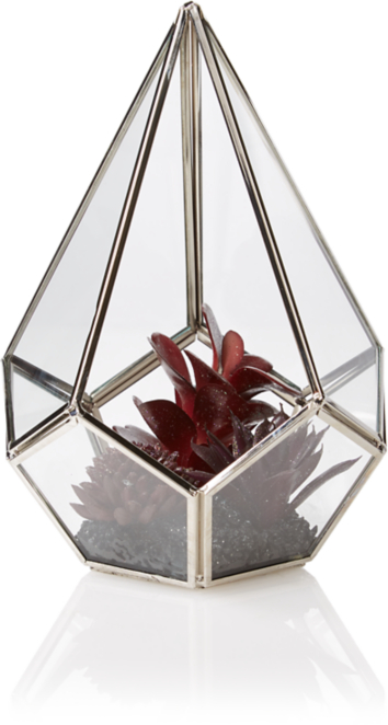 Glitter Effect Succulent In Glass Terrarium Home Garden George