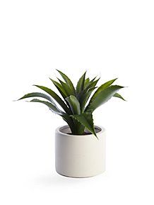 b7aabd904d1d4 Aloe Vera Arrangement In Round Pot