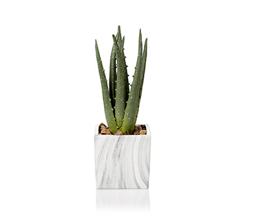 Refresh your space with our range of greenery
