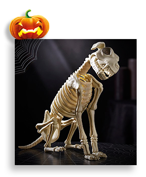 White Halloween Animated Barking Dog Skeleton with spider web and pumpkin in background.