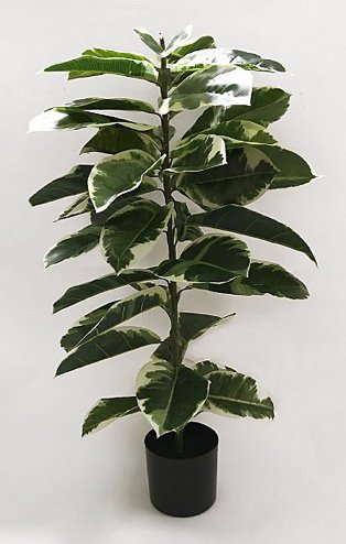 Artificial rubber plant in black pot