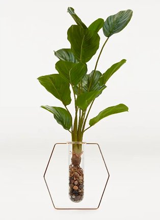 Artificial cheese plant in test tube vase.