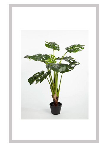 Artificial cheese plant in black pot