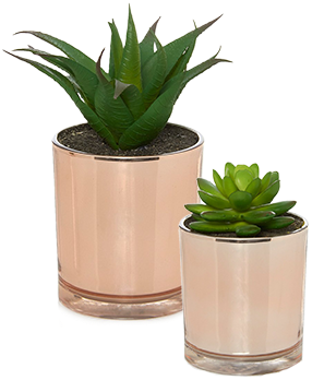Enhance your spread with copper succulent plants for lovely finishing touch at George.com