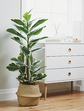 An artificial plant in a wicker basket next to white drawers