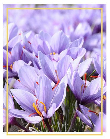 A bouquet of purple flowers