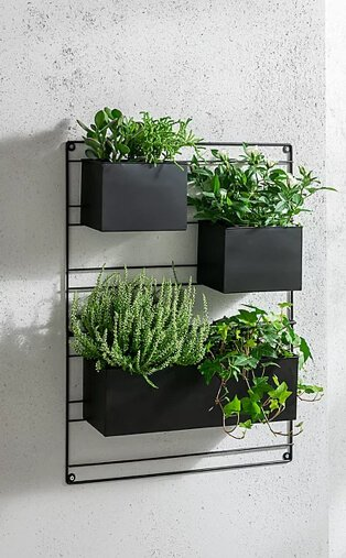 Black hanging wall planter frame filled with greenery.