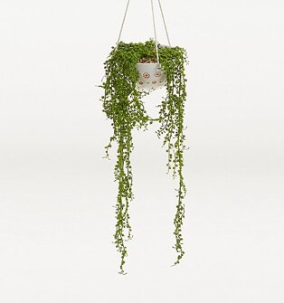 Artificial string of pearls in white round pot.