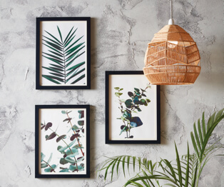Three plant prints with black photo frames placed on a grey wall accompanied by a rattan wicker ceiling shade