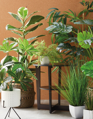 Three floor plants in white plant pots and a tall plant in a wicker basket surrounding a brown two-tiered table